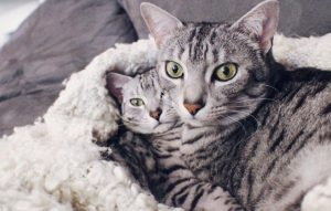 30 Kitties Cuddling For Cuddle Up Day [GALLERY]