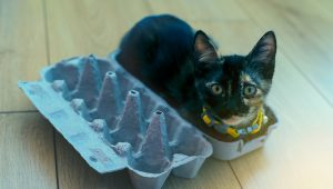 5 Easy Hacks To Make Your Home A Better Place For Your Cat