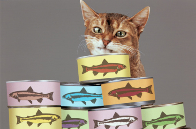 Cat Food For Finicky Eaters