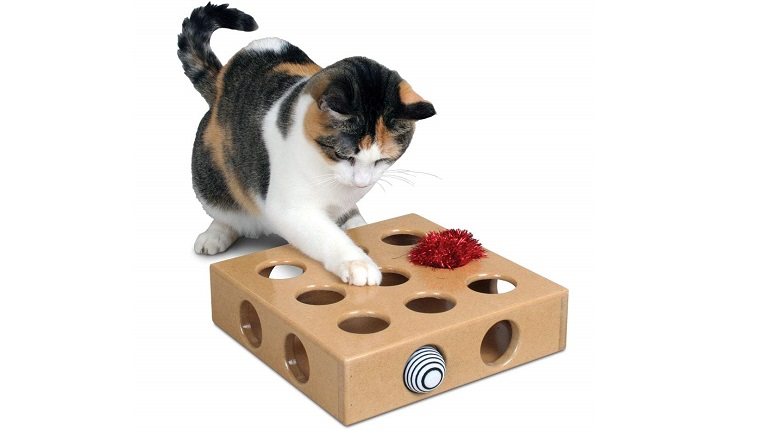 cat with puzzle toy
