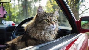 Life Hacks For Cats: 10 Tips For Road Trips With Your Kitty