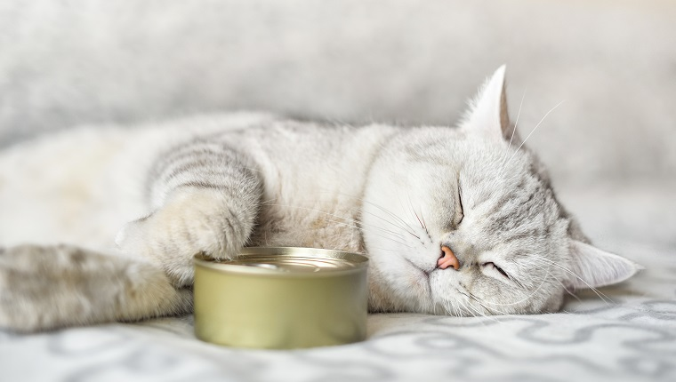 gray shorthair cat sleeping with a food can