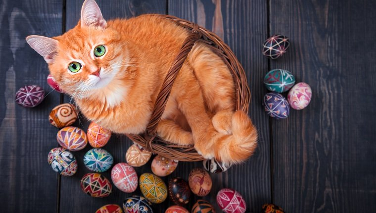 Cat sitting in a basket on a wooden background with Easter eggs around.