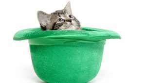10 Cute Pictures Of Cats For Saint Patrick's Day