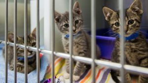 National Adopt A Shelter Pet Day: 6 Reasons To Adopt A Cat From A Shelter