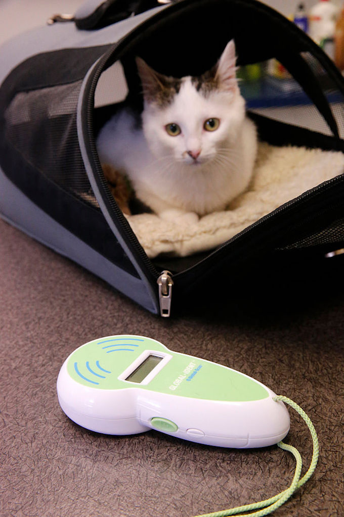 Can You Track A Microchipped Cat