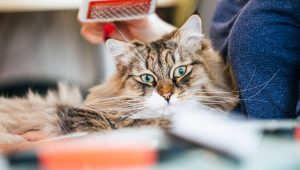 National Hairball Awareness Day: When Are Hairballs A Problem?