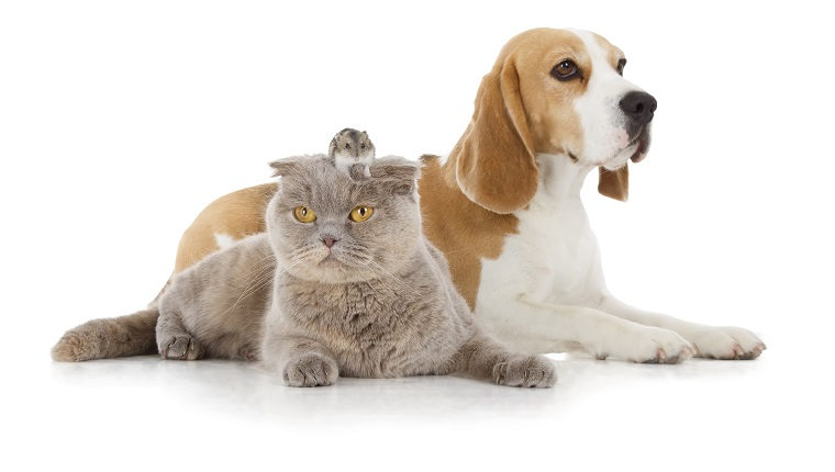 dog, cat and mouse isolated on white background