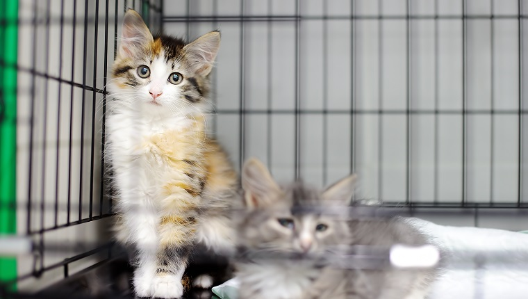 Two kittens in a cage in an animal shelter. Cats in a veterinary clinic