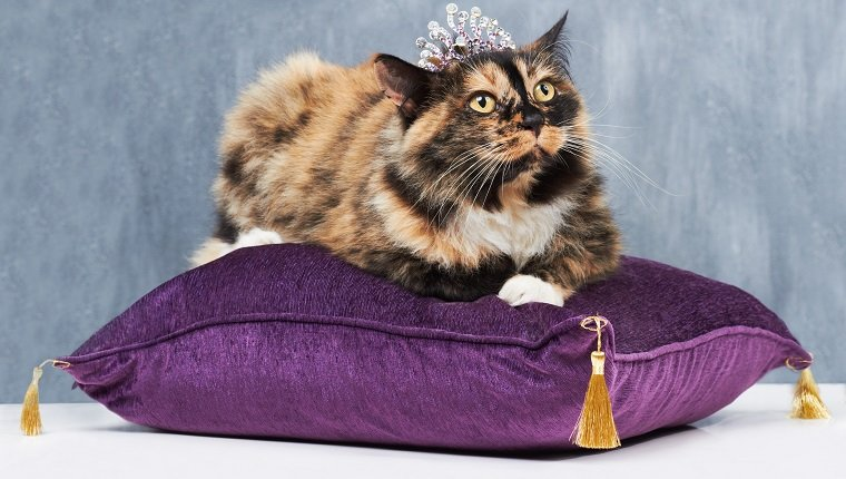 Pampered cat sitting on a velvet cushion and wearing a tiny tiara