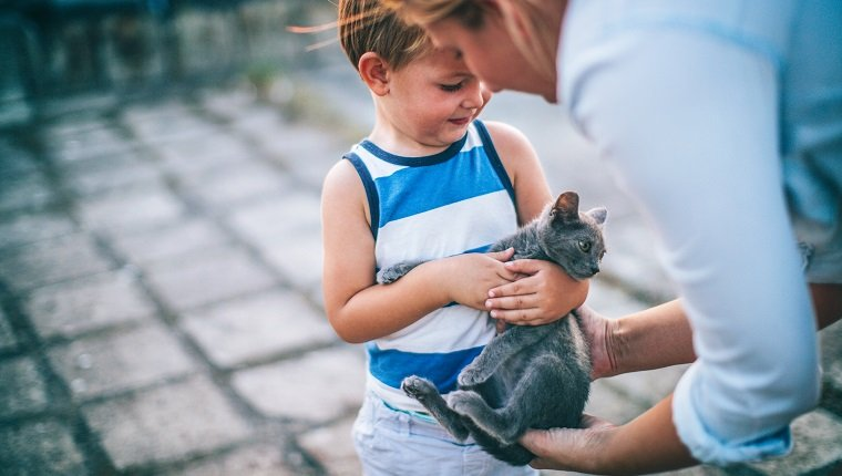 Little boy is meeting his new pet, little grey cat that is in parent's hands