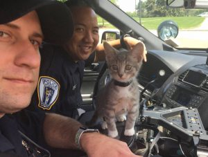POLICE CAT: Pawfficer Donut Reporting For Duty