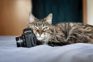 6 Tips For Taking Great Pics Of Your Cat On National Camera Day
