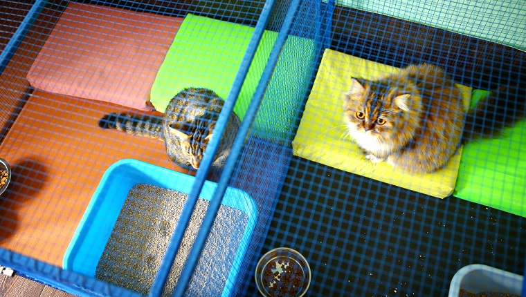 Two brown domestic cats resting in cages at cat shelter. This is actually cat sitter mansion where these cats stay while their owner are on vacation. Cats have all the privileges as that do at home. Top view.