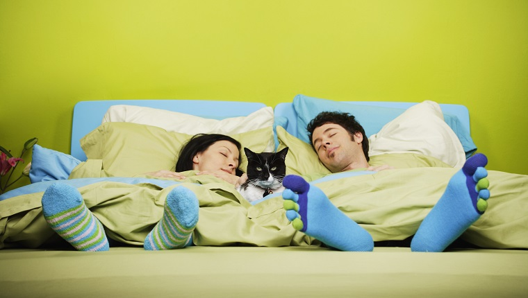 Couple sleeping with cat