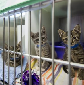 June Is Adopt A Cat Month: 10 Ways You Can Help Homeless Cats