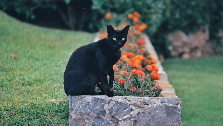 Portrait Of Black Cat Sitting On Retaining Wall Against Plants