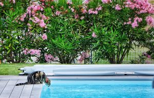 Pool Safety For Cats: Outdoor Summer Fun