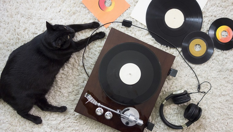 Black Cat listening to records on a white shag rug