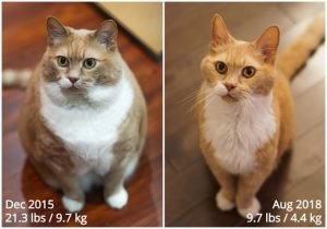 Get Motivated By This Obese Cat's Before And After Weight Loss Pictures