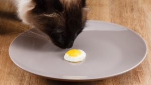 Can Cats Eat Eggs? Are Eggs Good For Cats?