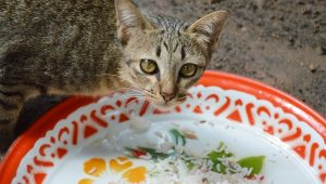 Can Cats Eat Rice? Is Rice Safe For Cats?