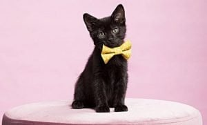 Check Out These Fashionable Cats Celebrating Bow Tie Day