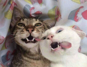 30 Happy Smiling Cats For Happy Cat Month [PICTURE GALLERY]
