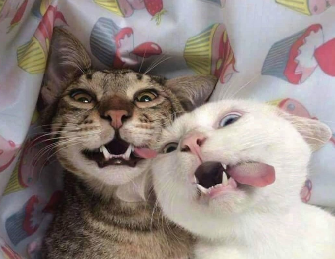 30 Happy Smiling Cats For Happy Cat Month [PICTURE GALLERY ...