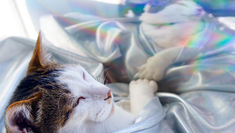 Cat sleeping hologram clothing