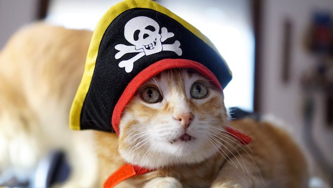 Ginger cat with green eyes wears a funny cosplay pirate of the Caribbean hat
