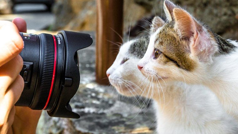 cats investigating camera zoom lens