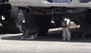 Poor Cat With A Broken Jar On His Head Gets Rescued [VIDEO]