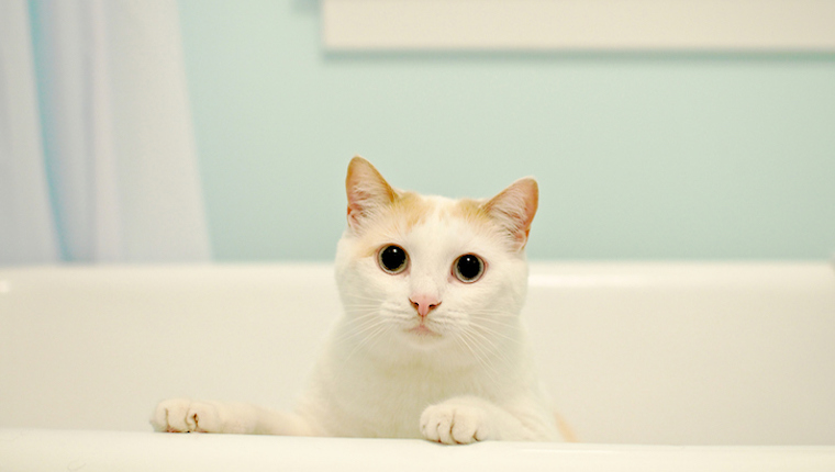 5 Ways Cats Are Celebrating Bathtub Party Day Cattime