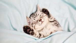 5 Kitten Videos To Get You Through The Cold Weather Blues