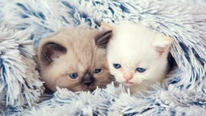 10 Cute Kitties Staying Cozy And Warm In Winter [PICTURES]