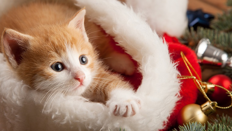 ginger kitten in santa hat against the background of a Christmas tree. christmas kittens are too cute.