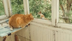 Squirrel Appreciation Day: These Cats Are Obsessed With Squirrels!