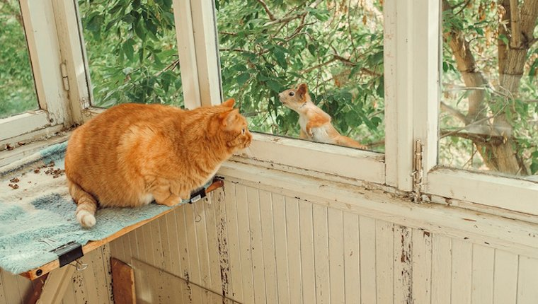 Ginger cat watching squirrel on balcony on Squirrel Appreciation Day