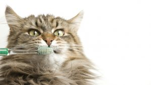 Does My Cat Need Dental Care?