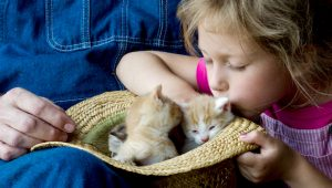 Kittens & What To Expect: 5 Essential Tips For When You Adopt