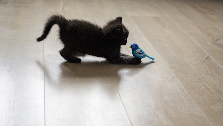 Black kitten playing
