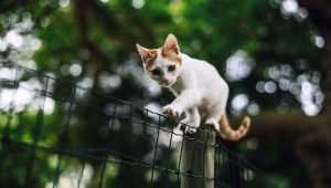 Pet Theft Awareness Day: 4 Tips To Help Prevent Cat Theft