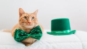 St. Patrick's Day: 5 Cat-Themed Gifts To Show Off Your Irish Side