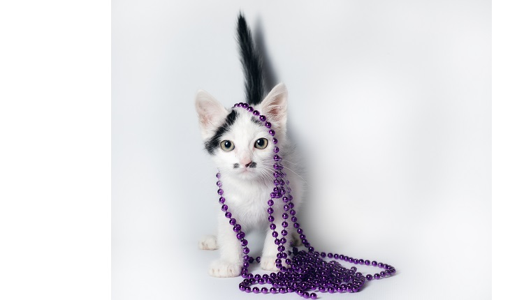 little black and white kitten with purple beads on white background