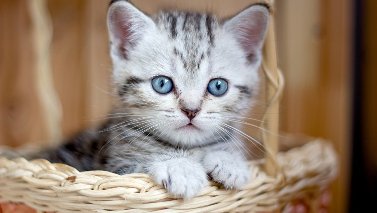 Adorable little kitten sitting in a wicker basket