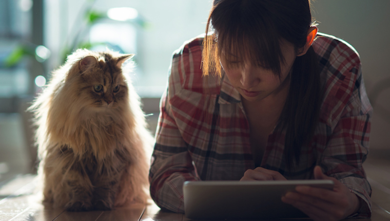 Cat and girl watching iPad