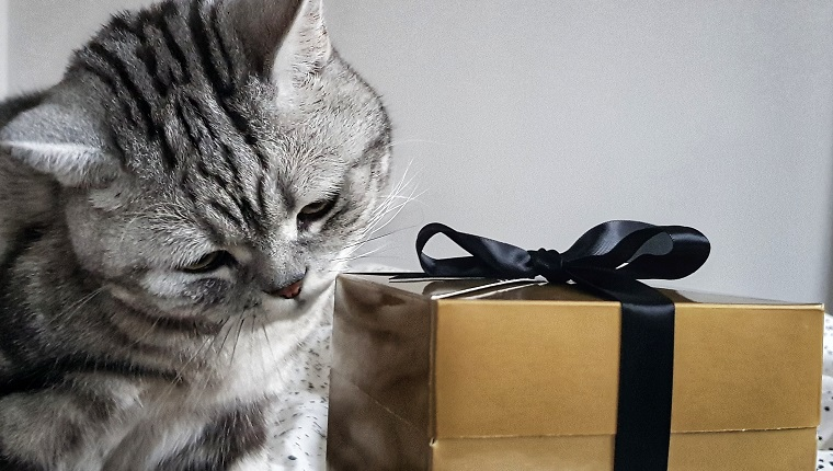 A cat checking a Christmas present in a golden box with black ribbon