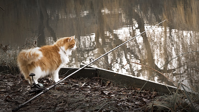 Fishing cat with fishing rod