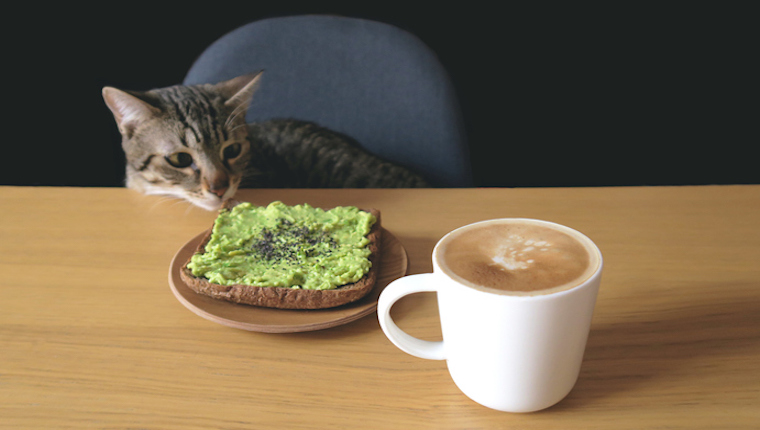 Cat looking at toast